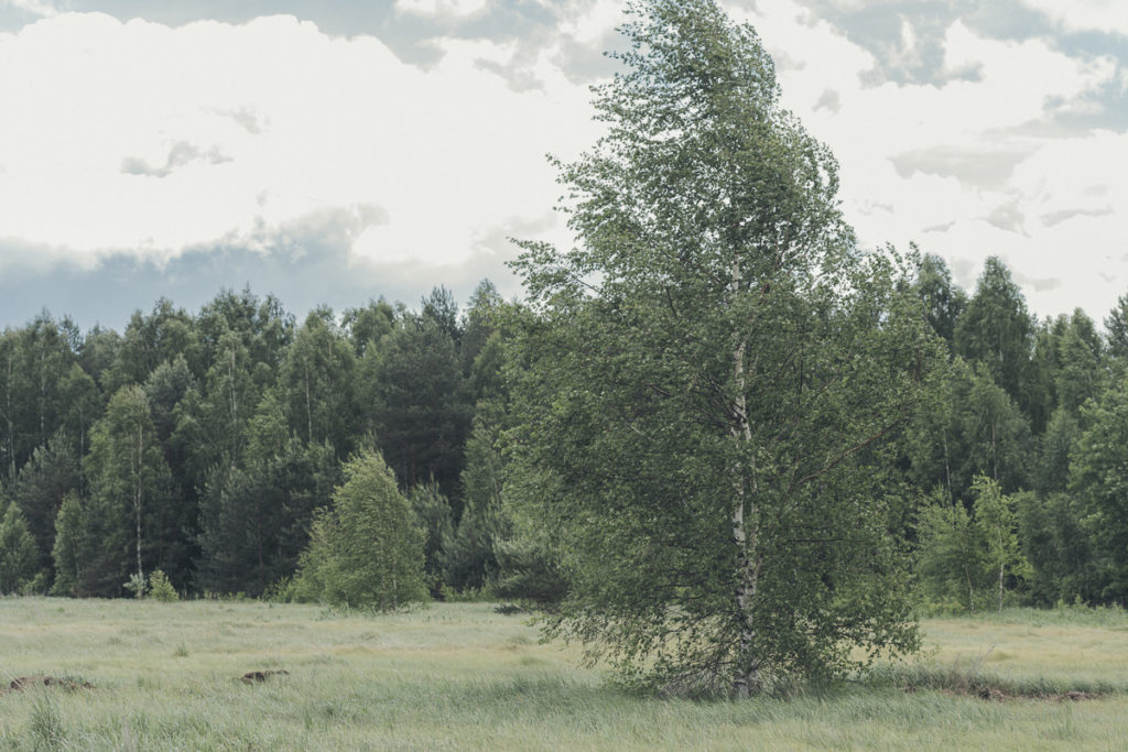 Мастерская доброго дерева